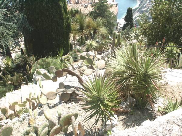 Merveilleux Jardin Exotique D Eze #2: PICT0759.jpg